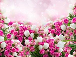 梦幻光斑郁金香玫瑰