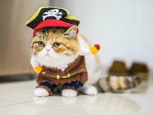 戴帽子的猫咪