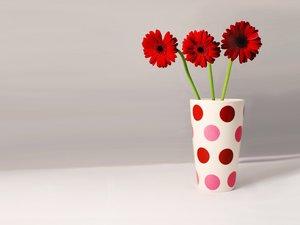 红色非洲菊插花