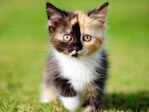 草地上的小猫咪