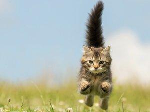奔跑的猫咪