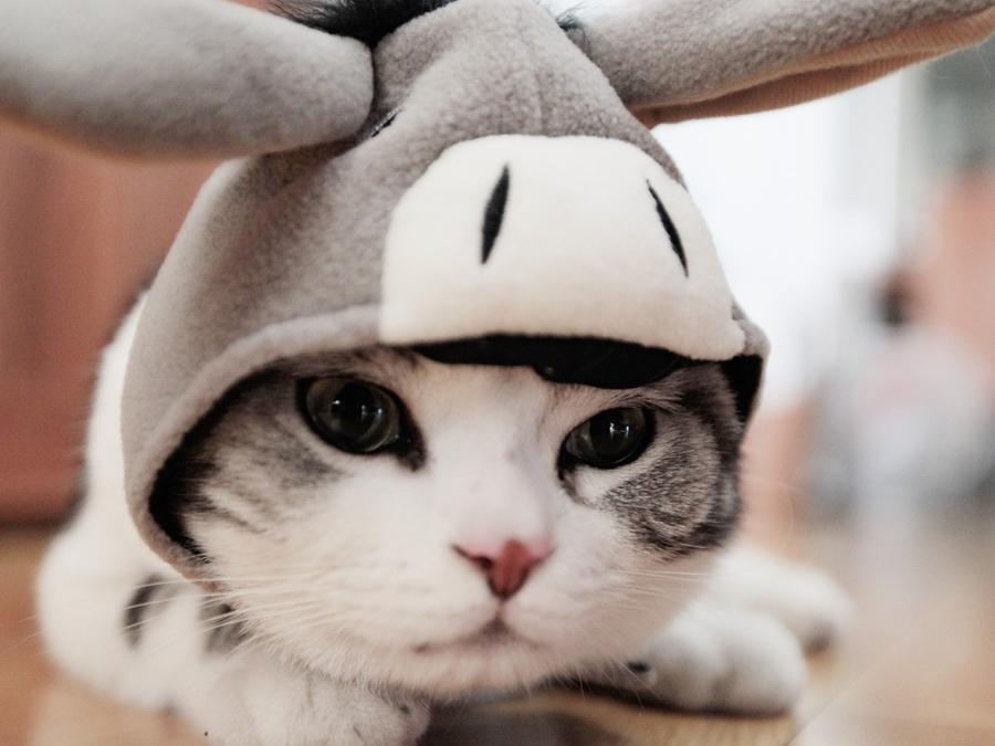 可爱的小萌猫走路