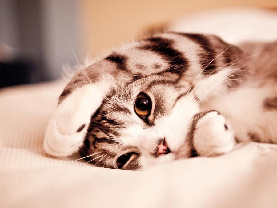 萌猫图片大全可爱
