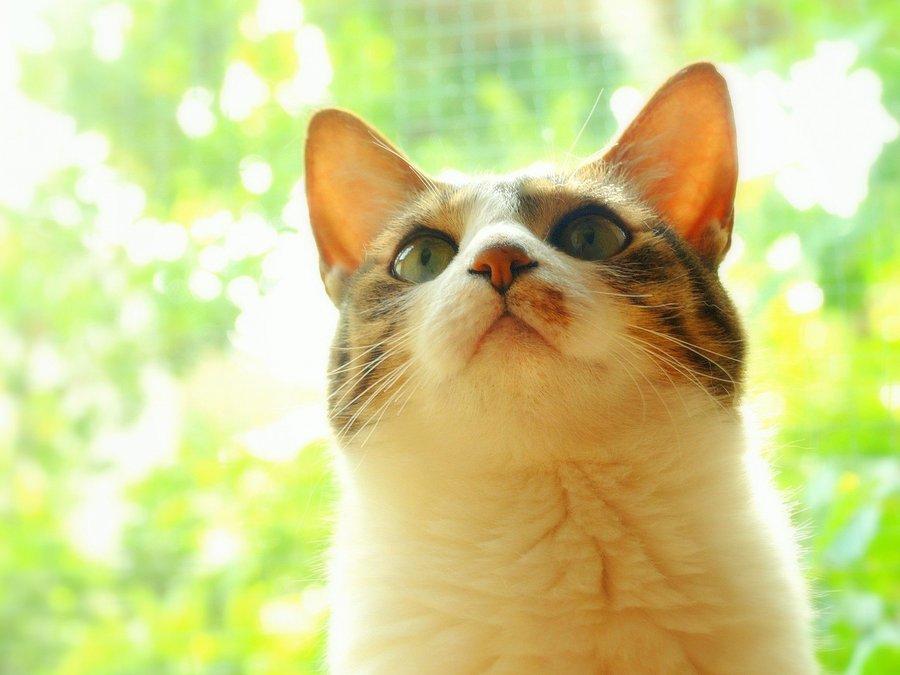 仰望天空的小猫