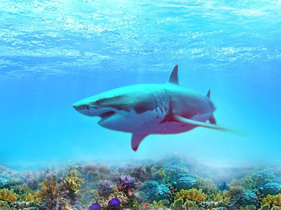 海底最少见动物大全