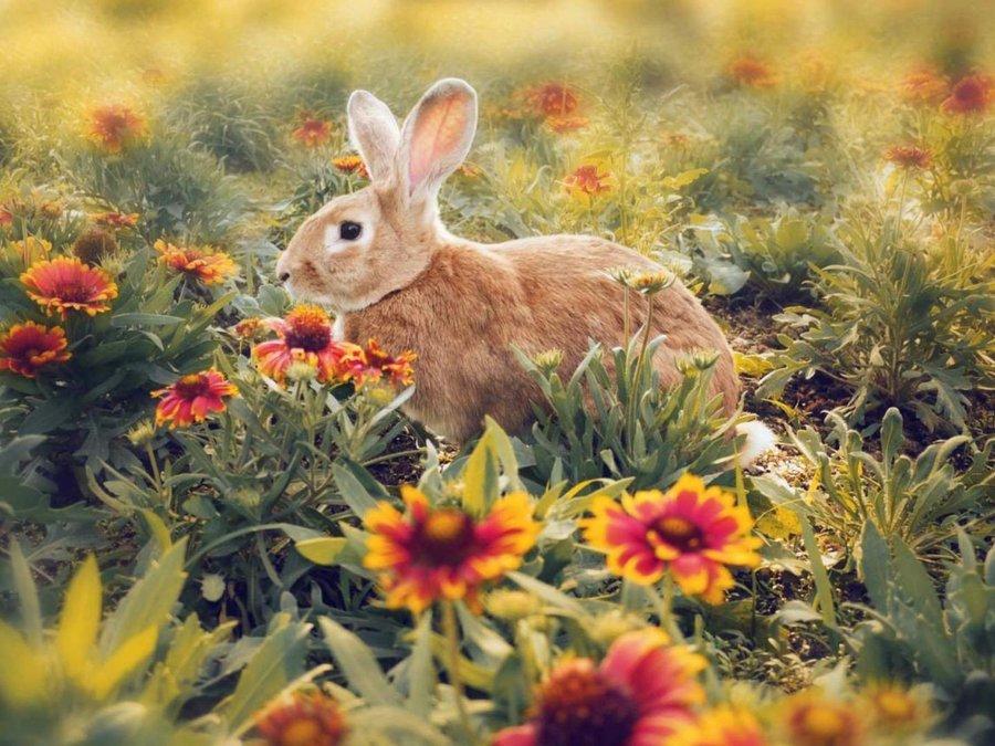 少儿国画兔子的步骤