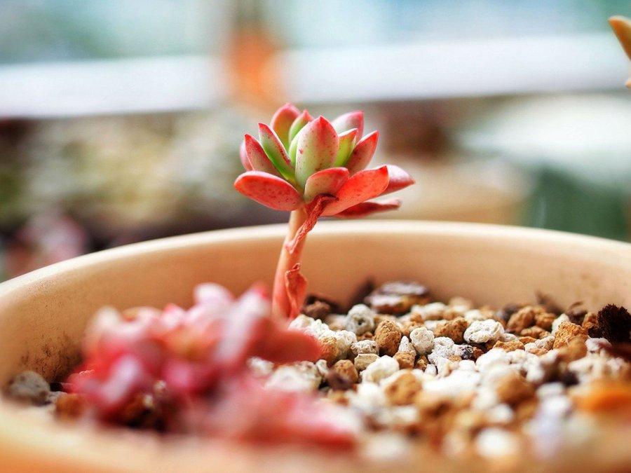 唯美多肉植物