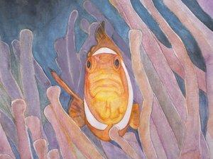手绘小丑鱼