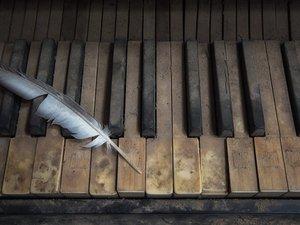 琴键上的羽毛