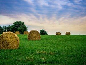 草地上的草卷