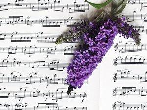 奏响希望的乐章