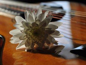 吉他上的芳香