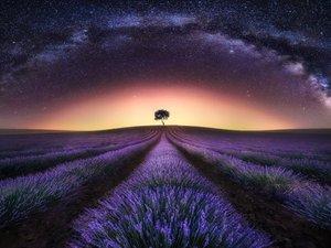 薰衣草上的星空
