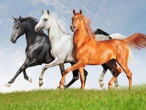 奔腾的马儿
