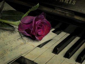 弹奏属于我们的旋律